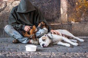psy i bezdomny
