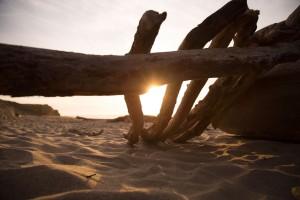 beach-sea-sand-tree